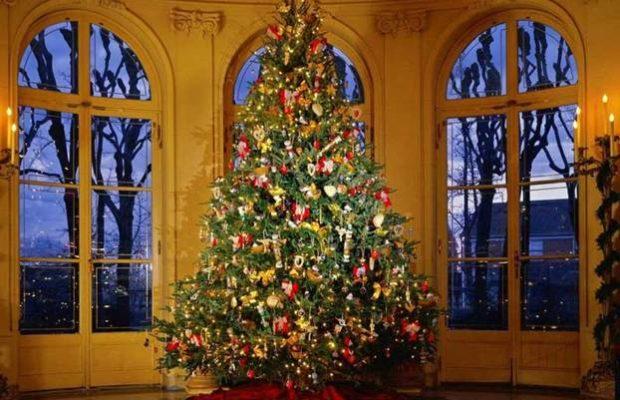 Sogni sotto l'albero, villa domi
