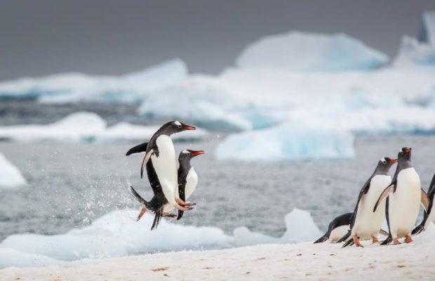 antartide-pinguini-danza